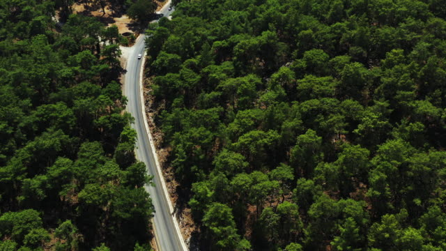 road in the middle of the forest - fethiye video stock e b–roll