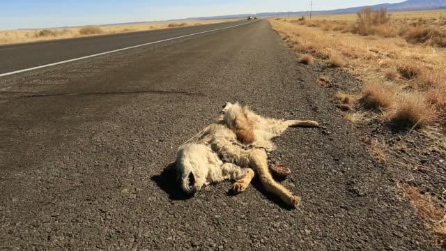 Road Kill video