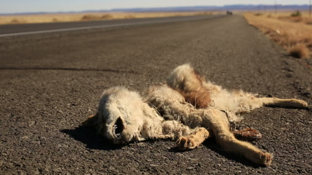 Road Kill video