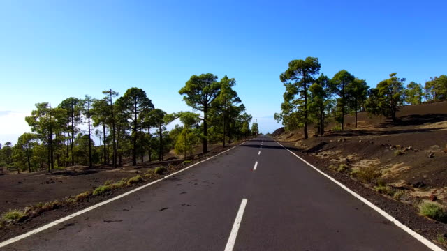 road over clouds and trees on teide mountains in tenerife - strada transitabile video stock e b–roll