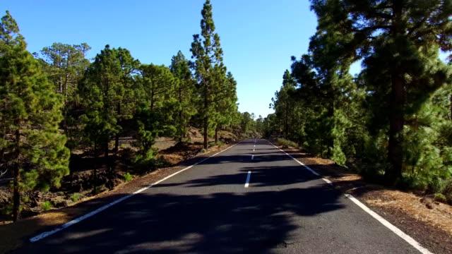 straße über wolken und bäume auf bergen der teide auf teneriffa - kiefernwäldchen stock-videos und b-roll-filmmaterial