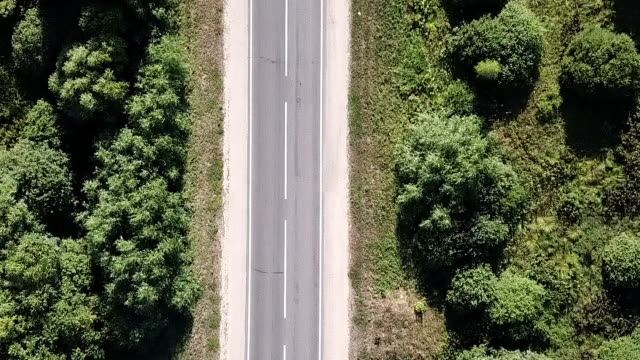 road through a green forest. - lungo video stock e b–roll