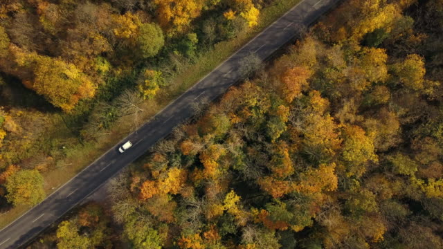 Road through autumn forest from above, Germany video