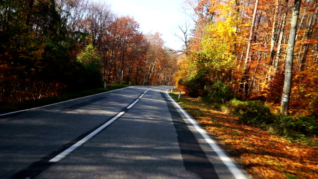Road through forest in autumn video