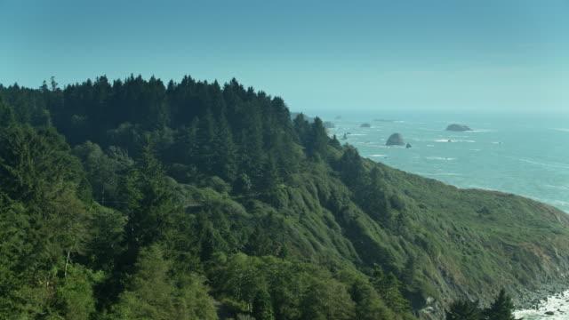 Route par des arbres de séquoia au-dessus de l'océan Pacifique - Vidéo
