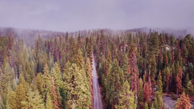 Road Through Sequoia National Forest, California video