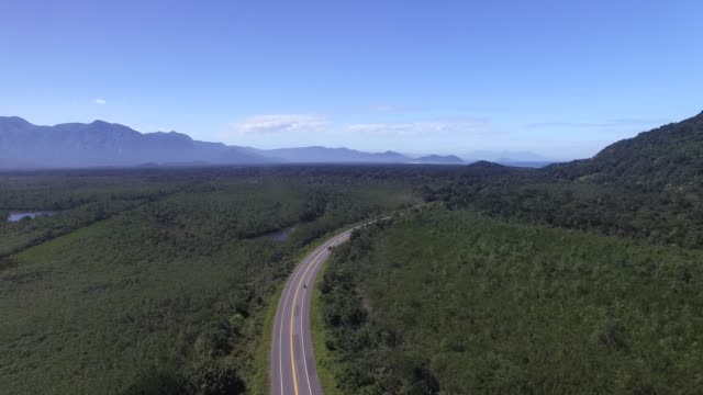 Road through the forest - Aerial video