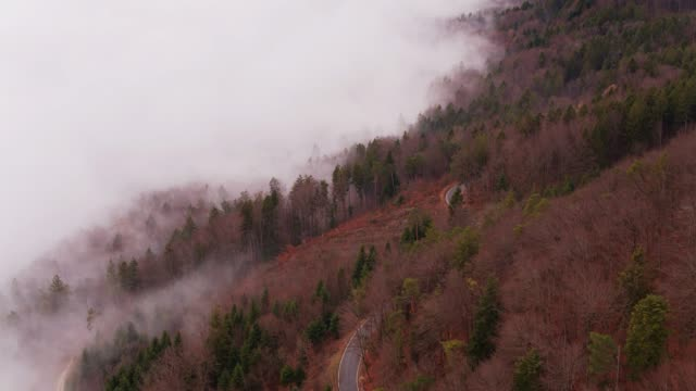 Road Through The Forest on Foggy Day - Aerial View video