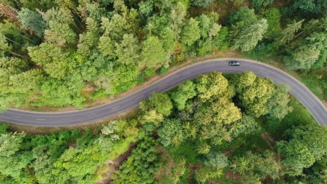 vídeos de stock e filmes b-roll de road through the forest - tracking shot, aerial view - carro na rua