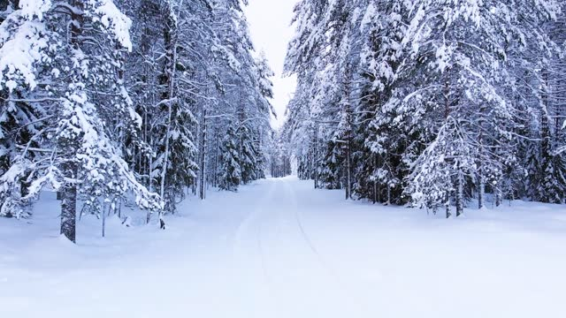 Road through the winter forest. Frozen trees and snow drifts.
