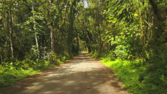 Road through tropical forest in Hawaii Going down a narrow dirt road through thick tropical forest in Hawaii. big island hawaii islands stock videos & royalty-free footage