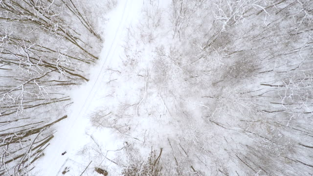 AERIAL Road through wintry forest video