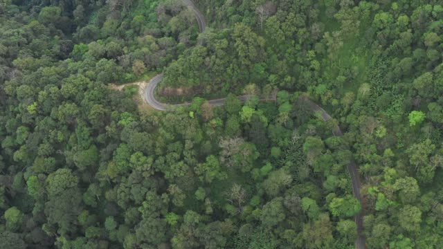 road trip through a forest - aerial point of view 4k video - аксессуар для волос стоковые видео и кадры b-roll