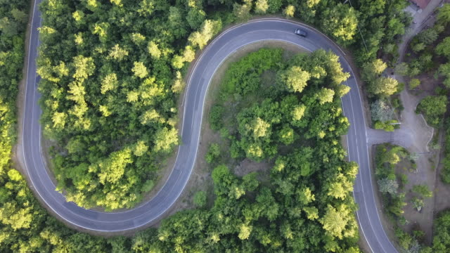 Road trip through a forest - Aerial point of view video