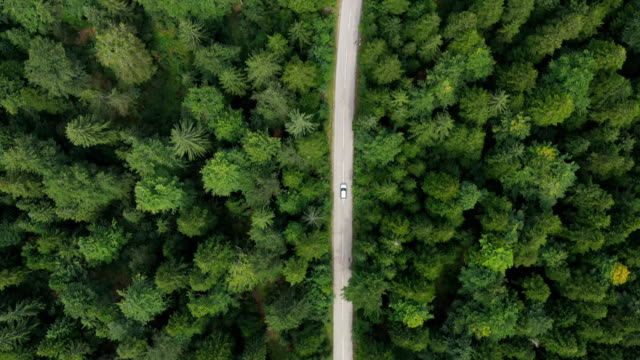 road trip through a forest - in cima video stock e b–roll