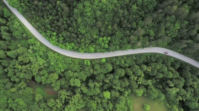 road trip genom en skog - liten skog bildbanksvideor och videomaterial från bakom kulisserna