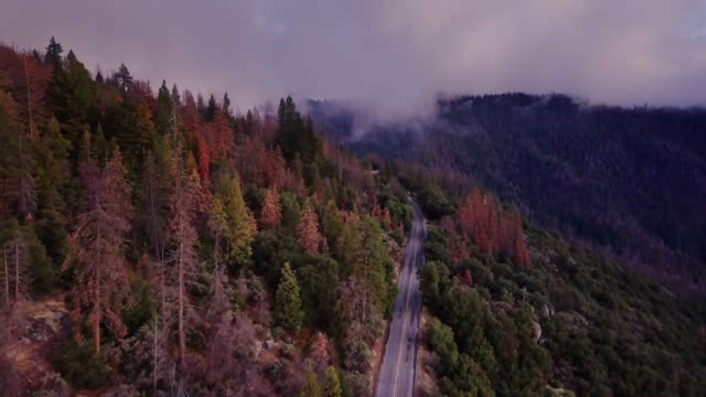 berg in kalifornien sierra nevada hinunter verdrehen straße - gebirge stock-videos und b-roll-filmmaterial