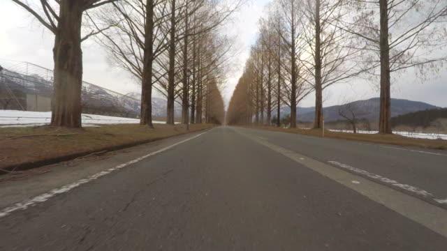 vídeos de stock e filmes b-roll de road with autumn trees -low angle- - reto descrição física