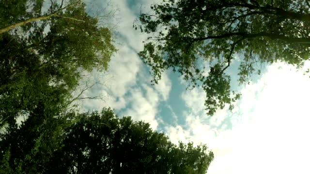 strada con alberi - sotto video stock e b–roll