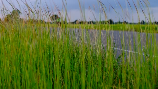 Roadside grass on a good day