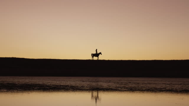 Roam wild, roam free 4k video footage of a silhouetted woman riding a horse on a ranch at sunset paddock stock videos & royalty-free footage