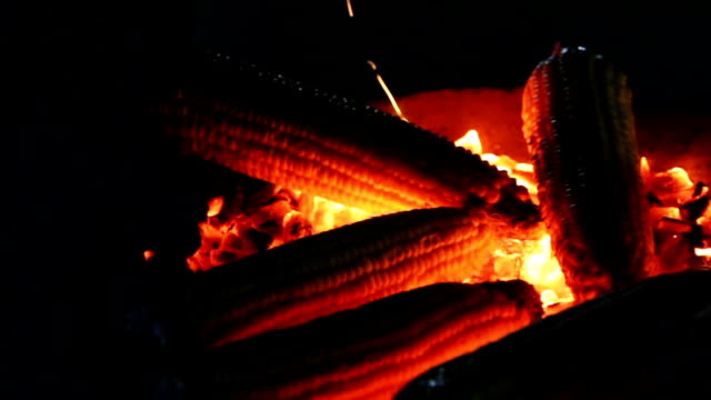 Roasted corn on the coals in the dark closeup video