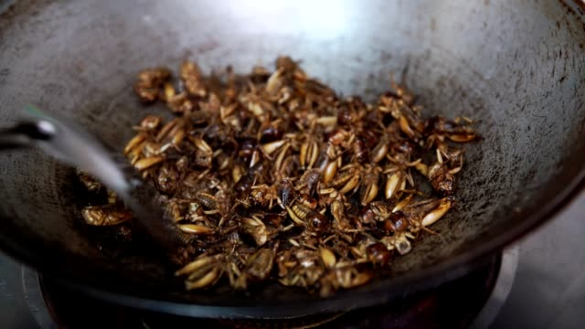 Roasted cricket, fried Insect in pan, cooking for meal video