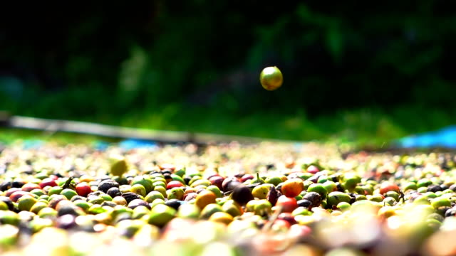 robusta-kaffee-farm. - koffeinmolekül stock-videos und b-roll-filmmaterial