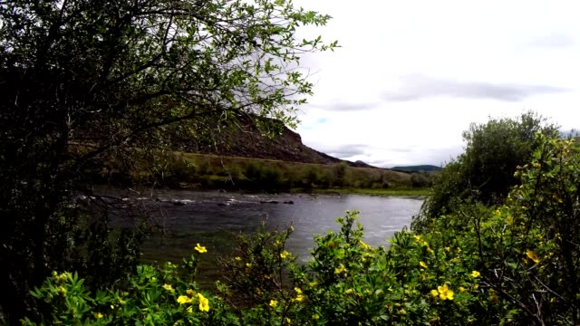 Rocking Bushes And Tree Branches on The Background of Unhurried Flow Mongolian Crystal Clear River in The Midst of a Vast Steppe video