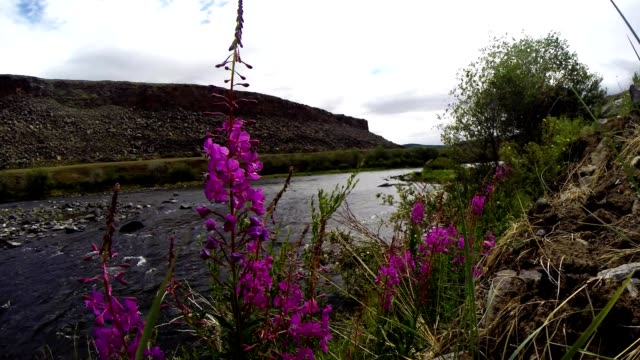 Rocking Grass And Flowers in The Background of Unhurried Flow Mongolian Crystal Clear River in The Midst of a Vast Steppe video