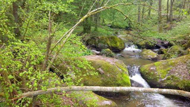 Rocky Creek Flowing in Idyllic Spring Forest