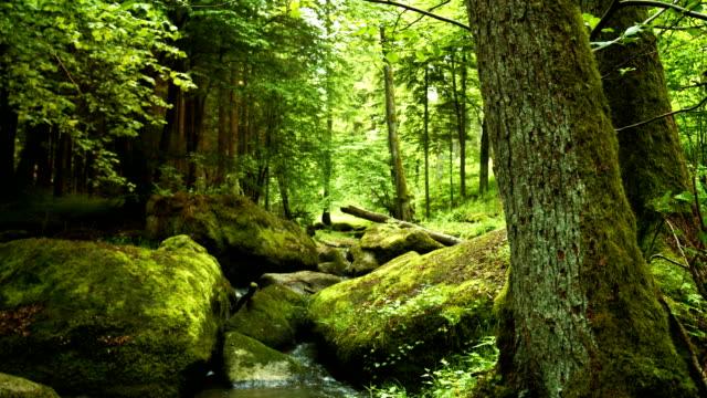 Rocky Forest Stream In Spring – film
