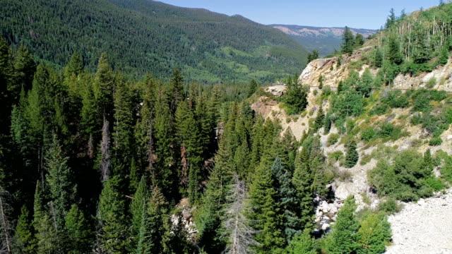 vídeos de stock, filmes e b-roll de vale de montanha rochosa com grande pinhal - independence pass