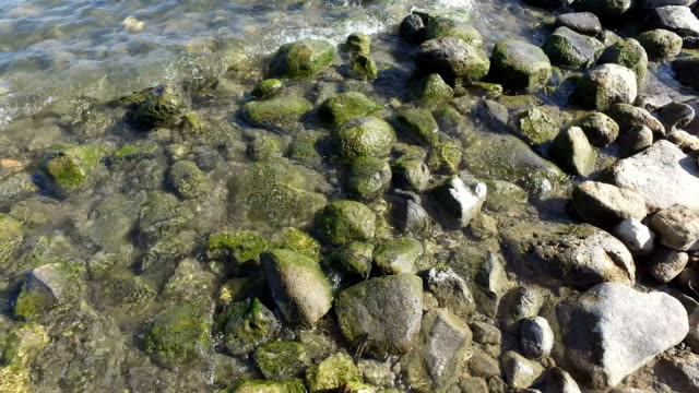 Rocky Path on Edge of Sea of Galilee video