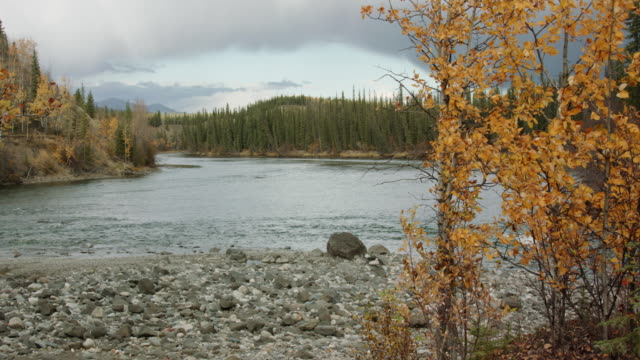 Rocky river shore view in northern Canada Beautiful wilderness scene in northern Canada. riverbank stock videos & royalty-free footage