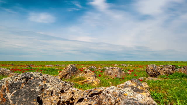 Rocky terrain with green grass and red tulips in the steppes of Kazakhstan video