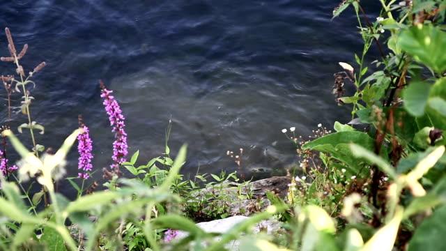 Des rongeurs se battre dans la rivière - Vidéo