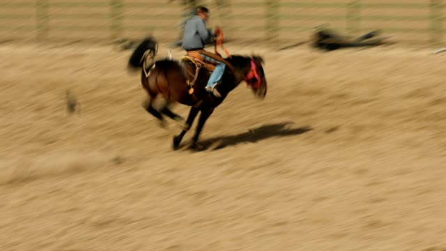 rodeo bucking bronco rodeo - rodeo stock videos and b-roll footage