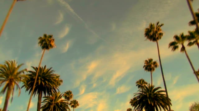 rodeo drive palm trees at sunset - hd - affluent lifestyles stock videos & royalty-free footage