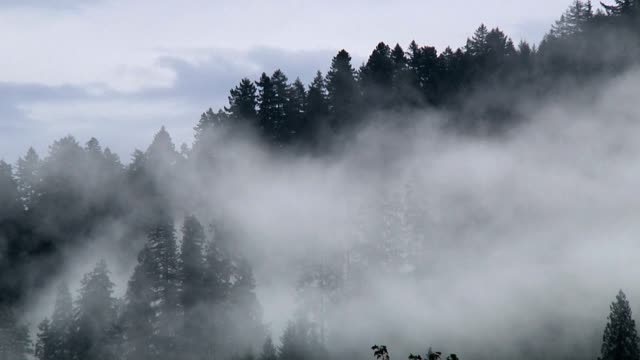 Rolling Forest Cloudscape video
