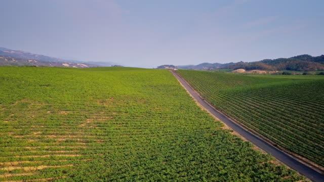 Rolling Landscape Covered in Vineyards video