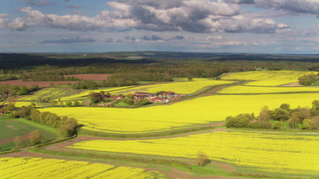 rolling landscape with rapeseed fields and farms in west sussex - drone shot - south downs video stock e b–roll