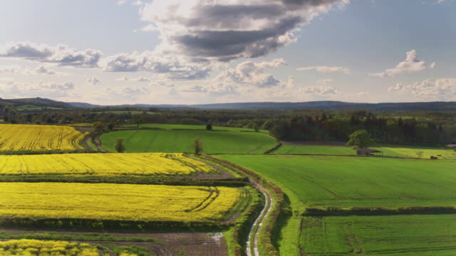 rolling landscape with rapeseed fields - drone shot - south downs video stock e b–roll