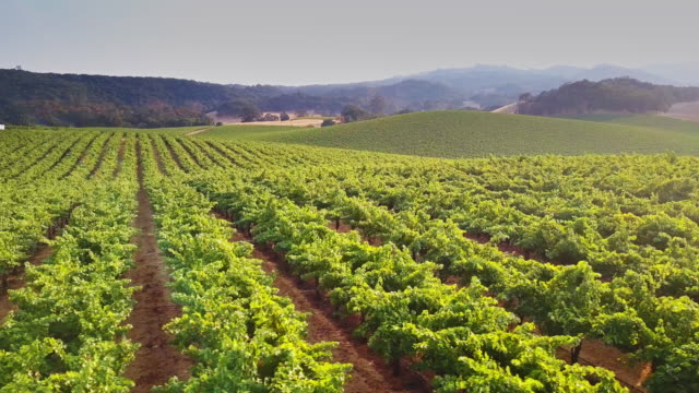 Rolling Northern California Landscape with Vineyards video