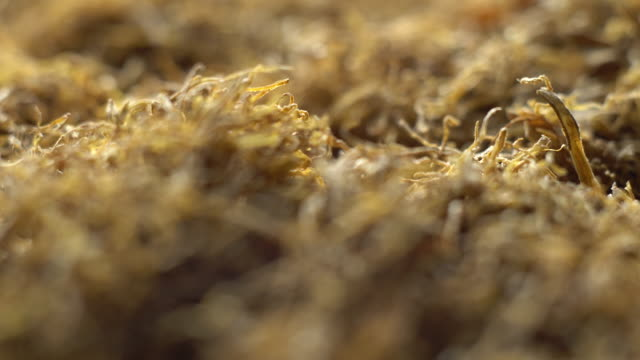 rolling tobacco in rotation. fine cut loose tobacco for self-madeâcigarettes. selective focus.  macro. - nicotina video stock e b–roll