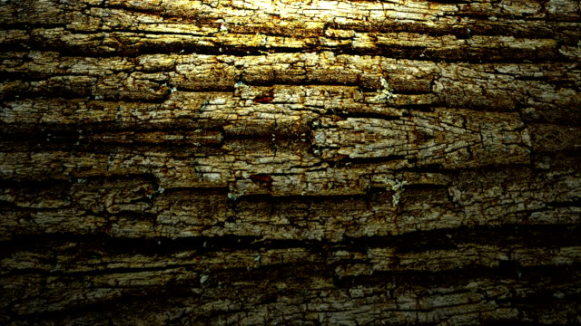 Rolling tree bark background video