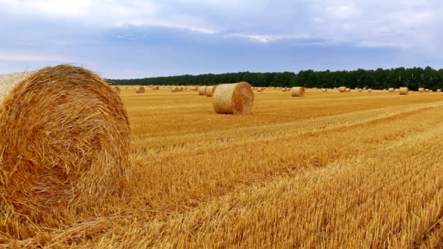 Rolls of Hay in a Field video