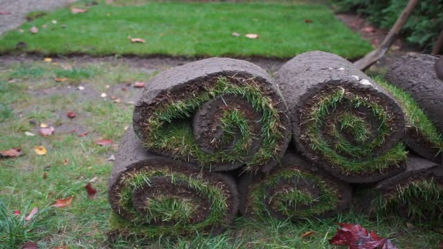 rolls of twisted lawn, green grass video