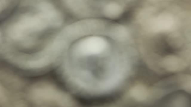 Roman coins video