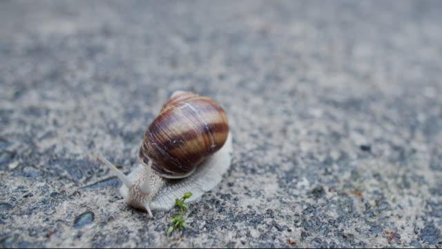 Roman snail time lapse
